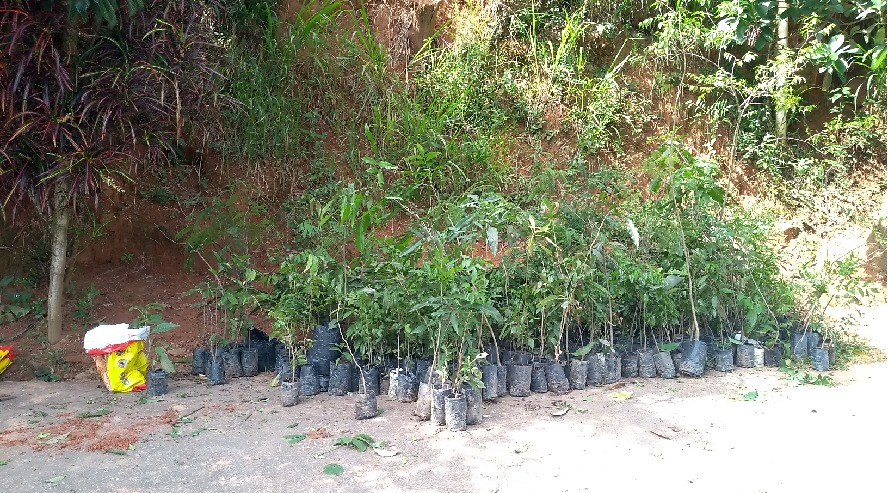 Quatis promove plantio de mudas na região de São Joaquim
